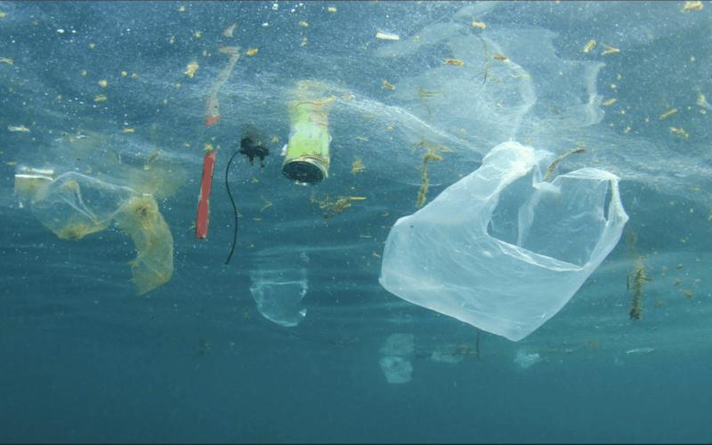 Ban Single Use Plastics – Artwork from Studio Art Students