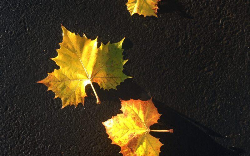 A Memory of Fall