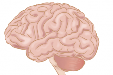 Scientists Discover Why Our Brains Are So Big