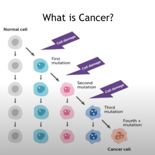How To Train Your T Cells: Immunotherapy, the Latest Cancer Treatments That Engineer Immune System Cells to Kill Cancer